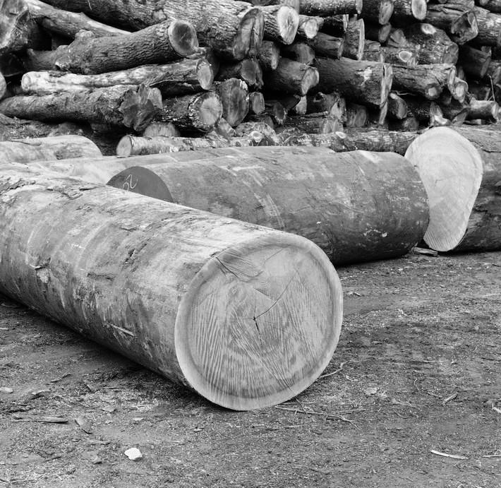 madera akoga